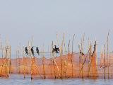 Cormorants and Fishing Nets, Tonle Sap Lake, Siem Reap, Cambodia, Indochina, Southeast Asia Photographic Print by Schlenker Jochen