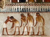 Harvesting Scene from the 18th Dynasty, Tomb of Menna, Tombs of the Nobles, Thebes, Egypt Photographic Print by Rawlings Walter