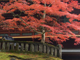 Japanese Maple, Tosho-Gu Shrine, Nikko, Central Honshu, Japan Photographic Print by Schlenker Jochen