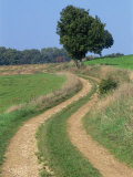 Empty Rural Road or Farm Track in Agricultural Land, Picardie, France, Europe Photographic Print by Thouvenin Guy