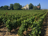 Alex-Corton, Burgundy, France, Europe Photographic Print by Simanor Eitan