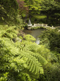 Tree Ferns and Duck Pond, Wellington Botanic Garden, Wellington, North Island, New Zealand, Pacific Photographic Print by Smith Don