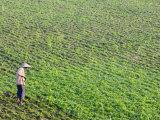 Farmer, Amarapura, Myanmar Photographic Print by Schlenker Jochen