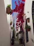 Bougainvillea in a Narrow Whitewashed Street in Upper Village, Mojacar, Almeria, Andalucia, Spain Photographic Print by Tomlinson Ruth