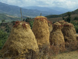 Tall Haystacks in the Vjosa Valley in Albania, Europe Photographic Print by Poole David