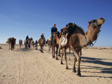 Tourists on Camel Trek, Near Douz, Sahara Desert, Tunisia, North Africa, Africa Photographic Print by Poole David
