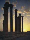 Sunrise on Main Street, Palmyra, UNESCO World Heritage Site, Syria, Middle East Photographic Print by Simanor Eitan