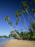 Palm Tree Lined Beach on Matangi Island, with Qamea Island Behind, Fiji, Pacific Islands, Pacific Photographic Print by Murray Louise