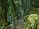 Walking Track Through Dorrigo National Park, New South Wales, Australia, Pacific Photographic Print by Schlenker Jochen