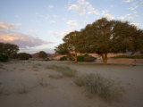 Hoanib, Dry River Bed, Namibia, Africa Photographic Print by Milse Thorsten
