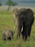 Female and Calf, African Elephant, Masai Mara National Reserve, Kenya, East Africa, Africa Photographic Print by Murray Louise