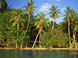 Beach, Palm Trees and Cottages of Uepi Island Resort in the Solomon Islands, Pacific Islands Photographic Print by Murray Louise
