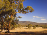 Trees and Fields, the Grampians National Park, Victoria, Australia, Pacific Photographic Print by Schlenker Jochen