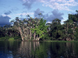 Dense Forest Bordering the Napo River, Ecuador, South America Photographic Print by Sassoon Sybil