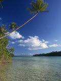 Palm Tree over Sandy Channel at Marovo Lagoon, Solomon Islands, Pacific Islands, Pacific Photographic Print by Murray Louise