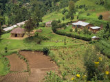 Aerial View of Children Leaving School and Terraced Fields, Kabale, Uganda, Africa Fotografisk tryk af Poole David