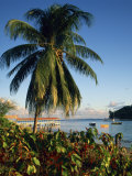 Jetty and Palm Tree, Villa Bay, Young Island, St. Vincent, Windward Islands, West Indies, Caribbean Photographic Print by Richardson Rolf