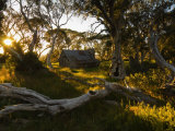 Wallace's Hut, Bogong High Plains, Apline National Park, Victoria, Australia, Pacific Photographic Print by Schlenker Jochen