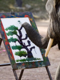Elephant Painting, Chiang Mai, Thailand, Southeast Asia Photographic Print by Porteous Rod