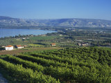 View of the Sea of Galilee, Zemakh Area, Israel, Middle East Photographic Print by Simanor Eitan