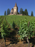 Vines Lead Up to Church Above the Vineyard at Hunawihr in Alsace, France, Europe Photographic Print by Thouvenin Guy