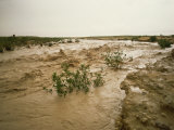 Flash Flood in Oued in Normally Dry Algerian Sahara Region, Algeria Photographic Print by Renner Geoff