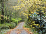 Gravel Road in Autumn, Dandenong Ranges, Victoria, Australia, Pacific Photographic Print by Schlenker Jochen