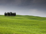Cypress Trees Near San Quirico D'Orcia, Val D'Orcia, Siena Province, Tuscany, Italy, Europe Photographic Print by Pitamitz Sergio