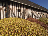 Piles of Cider Apples Used for Making Calvados, Domaine Coeur De Lion, Normandie, France, Europe Photographic Print by Thouvenin Guy
