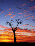 Boab Tree at Sunrise, Kimberley, Western Australia, Australia, Pacific Photographie par Schlenker Jochen