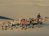 Camel Caravan, Dunes De Khongoryn Els, Gobi National Park, Gobi Desert, Mongolia, Central Asia Photographic Print by Morandi Bruno