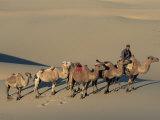 Camel Caravan, Dunes De Khongoryn Els, Gobi National Park, Gobi Desert, Mongolia, Central Asia Photographic Print by Morandi Bruno