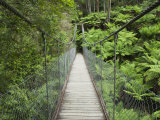 Suspension Bridge and Rainforest, Tarra Bulga National Park, Victoria, Australia, Pacific Photographie par Schlenker Jochen
