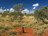 Termite Mounds in the Outback, Queensland, Australia, Pacific Photographic Print by Schlenker Jochen