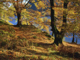 Autumn Trees at Ullswater, Lake District National Park, Cumbria, England, United Kingdom, Europe Photographic Print by Rainford Roy