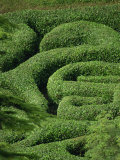Glendurgan Maze, Cornwall, England, United Kingdom, Europe Photographic Print by Woolfitt Adam