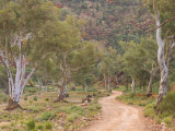 Brachina Gorge, Flinders Ranges National Park, South Australia, Australia, Pacific Photographic Print by Schlenker Jochen