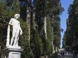 Viottolone, Viottolone Avenue, Boboli Gardens, Florence, Tuscany, Italy, Europe Photographic Print by Tondini Nico