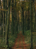 Woodland in Autumnal Hues Photographic Print by Woolfitt Adam