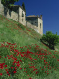 Poppies on Hillside Below the Town, Siguenza, Castilla-La Mancha, Spain, Europe Photographic Print by Tomlinson Ruth