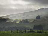Rural Pasture and Farmland, Ruahine Ranges, Manawatu, North Island, New Zealand, Pacific Photographic Print by Smith Don