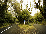 Road Through Native Bush at Dawson Falls, Egmont National Park, Taranaki, North Island, New Zealand Photographic Print by Smith Don