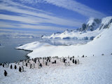 Gentoo Penguins Stand on Snow on the Shore Along the Coast of the Antarctic Peninsula, Antarctica Photographic Print by Renner Geoff