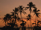 Coconut Palms, Boca Chica, South Coast, Dominican Republic, West Indies, Central America Photographic Print by Thouvenin Guy