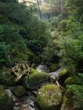 Arakawa River, Yaku-Shima, Kyushu, Japan Photographic Print by Schlenker Jochen
