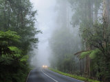 Road and Fog, Dandenong Ranges, Victoria, Australia, Pacific Photographic Print by Schlenker Jochen
