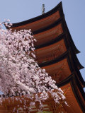 Five Storey Pagoda and Blossom, Miyajima, Japan Photographic Print by Richardson Rolf