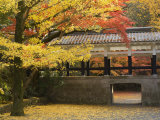 Ginkgo Tree, Garden of Nanzenji Temple, Kyoto, Kansai, Honshu, Japan Photographic Print by Schlenker Jochen
