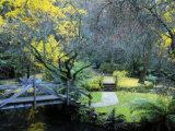 Footbridge, Alfred Nicholas Gardens, Dandenong Ranges, Victoria, Australia, Pacific Photographic Print by Schlenker Jochen