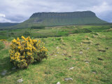 Gorse Bush and Fields Below Benbulben Mountain in County Sligo, Connacht, Republic of Ireland Photographie par Rainford Roy